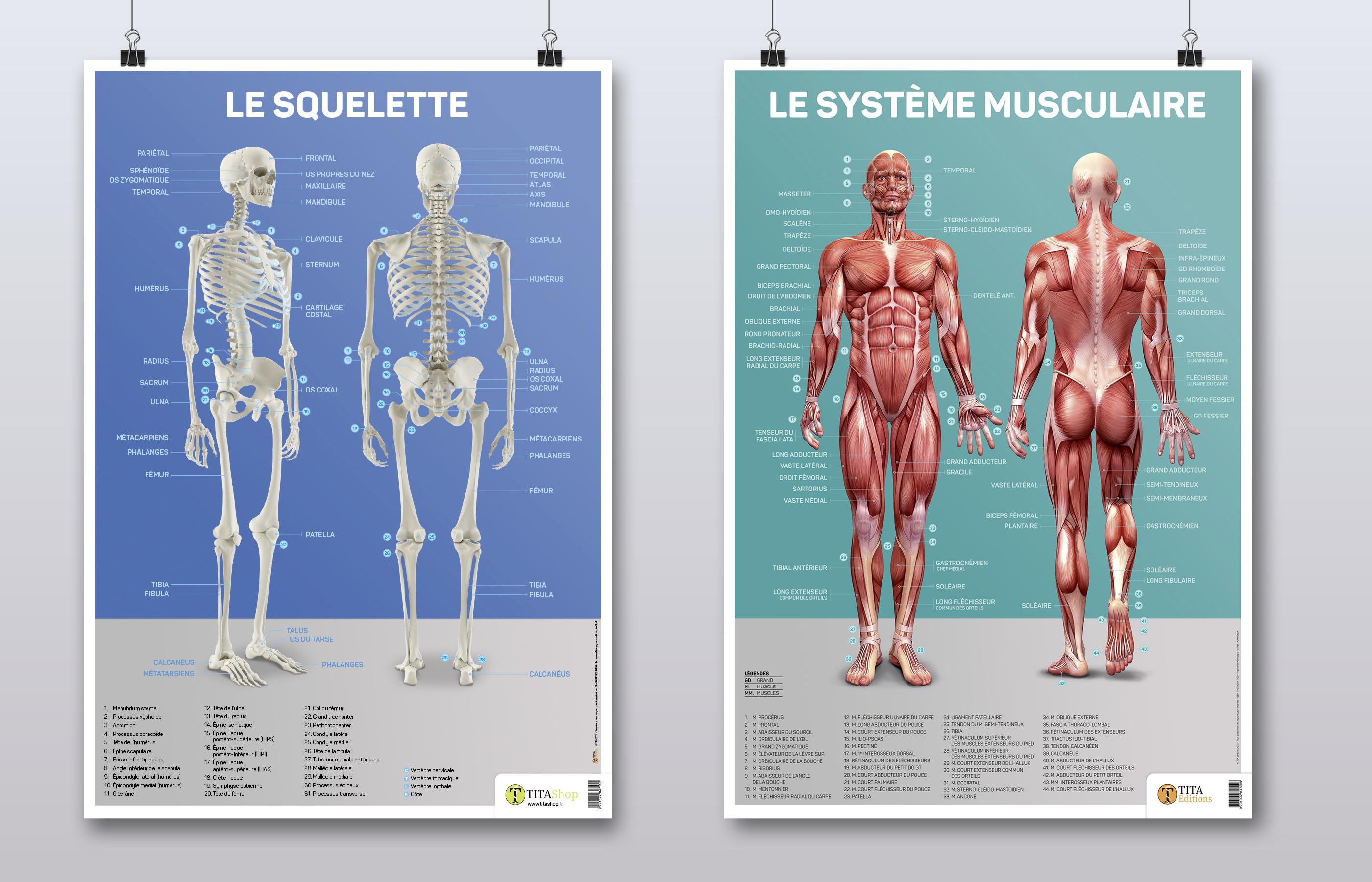 2 poster Tita anatomie